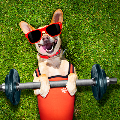 dog lying in grass with dumbbell and weights