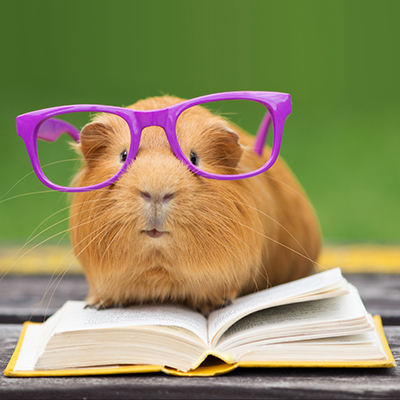 hamster with glasses reading a book